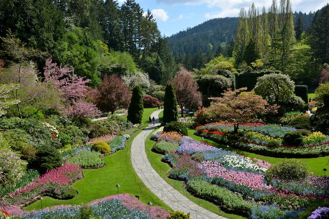Spring time in Butchart Gardens